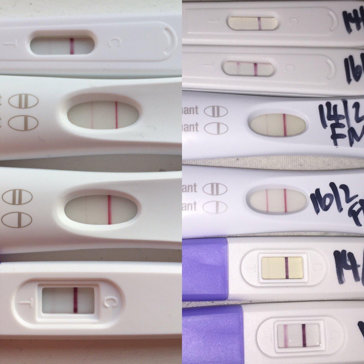 first response pregnancy test line progression